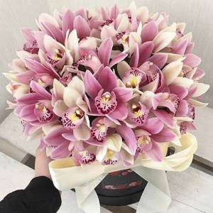51 орхидея в коробке R789